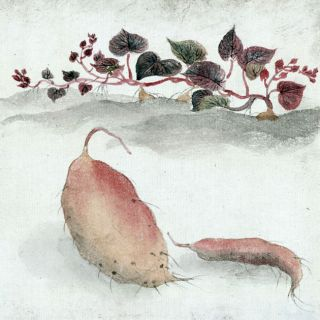 Sweet potato or yam with plant growing in the bg   Japanese Woodcut