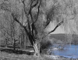 Black & White Willow Tree Blue Lake Interior Home Wall Art Matted