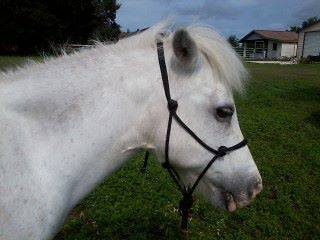 NEW Miniature/Mini Horse ROPE HALTER regular Adult size   larger size