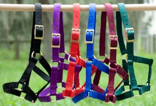 Nylon Miniature Horse Halter Standard ~ Choice of Size & Color ~ USA