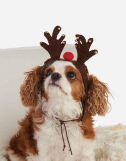Mud Pie Santa Paws Collection Plush Felt Reindeer Dog Pet Hat Headband