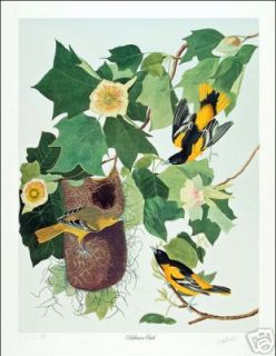ltd ed loates audubon baltimore oriole bird print time left