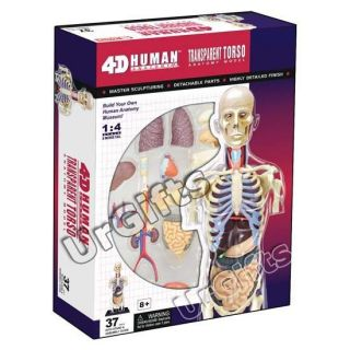 4D Puzzle Human Anatomy Model Transparent Body Skeleton Torso NEW