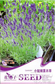 Lavender Seeds Bright Purple Color Pleasant Lovely 20 Grass Seeds