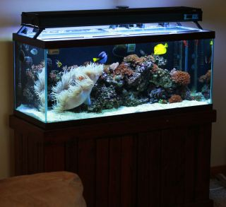 BEAUTIFUL 75 GALLON SALTWATER REEF AQUARIUM FISH TANK ENTIRE PACKAGE
