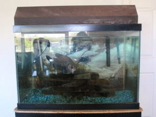 60 Gallon Aquarium Fresh Water Marine Fish Tank Overhead Light, Pumps