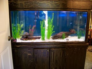 120 Gallon Aquarium Fish Tank with Custom Wood Cabinet