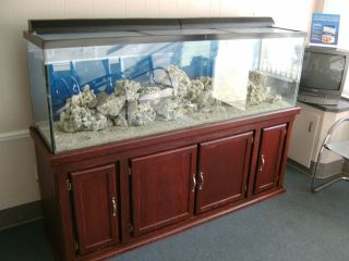 Beautiful 125 gal fish tank aquarium on stand with filters pump and