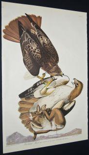 AUDUBON Birds of America   Amsterdam Edition FOLIO   Red tailed Hawk