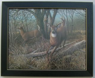 Deers Antlers Big Buck Deer Framed Country Pictures