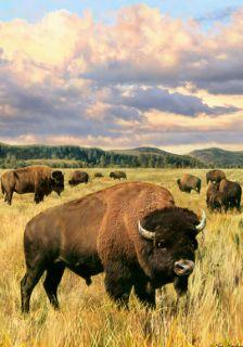 LARGE HOUSE YARD FLAG 28x40 Prairie Grazing Bison Buffalo FLAG