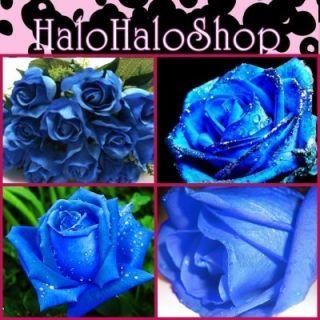 30FREE Blue Roses Rose Prosperity Family Rosaceae Flower Seeds B3004
