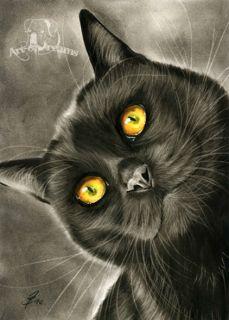 Gatto Black Cat Katze Kitten Kitty Chat Gato Feline Kater Kätzchen