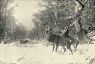 Antique KRONER Hunting Sporting Print Winter Snow Deer Stag Wild Boar