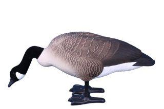 GOOSE Decoys 4 Higdon Canada Geese Feeder Syle GOOSE Decoys Flocked