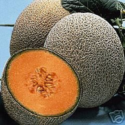 this is a package of hale s best cantaloupe with 50 seeds true