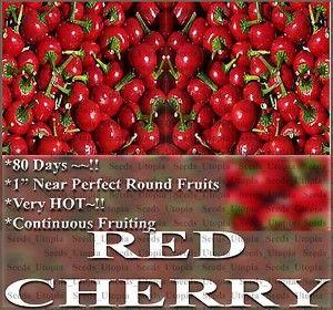 Hot Pepper Seeds BST Very Hot Nonstop Fruit Red Cherry