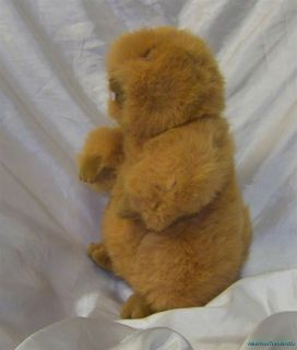Adorable Gund Plush Chubby Orange Woodchuck/Groundhog   Retired