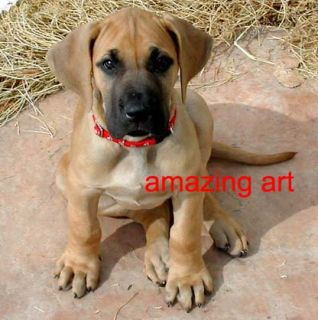 Hand Painted Animals Dog Oil Painting Great Dane Puppy