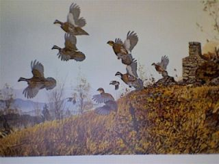 David Hagerbaumer Signed Limited Edition Print Quail