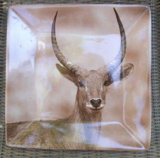 Dario Farrucci Designs Giraffe African Safari Square Dinner Plate