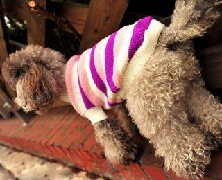 Designer Dog Clothes Stripy Hoodies Coat Puppy Cloth Pet Apparel