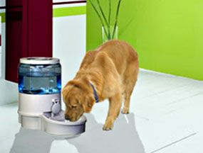 Filtered Auto Pet Cat Dog Waterer Water Fountain Small