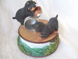 Rottweiler Puppies San Francisco Music Box Dogs at Play