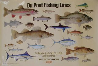Fish of North America 29 Posters Trout Salmon Maynard Reece Schmidts
