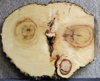 Gorgeous Red Flame Box Elder Live Edge Table Small Counter Top Slab