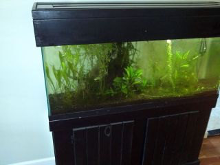55 Gallon Aquarium Fish Tank with Stand Hood EXTRAS