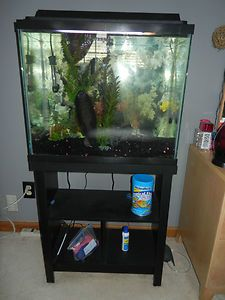 Fish Tank With Stand in Aquariums