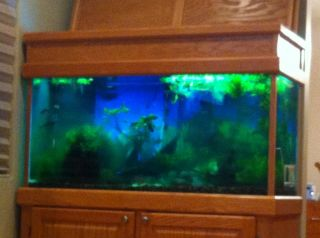 Fish aquarium 90 gallon sorry the pictures its not that for 90 gallon fish tank stand