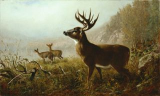 Arthur Fitzwilliam Tait Tempting Shot Stag Deer Print