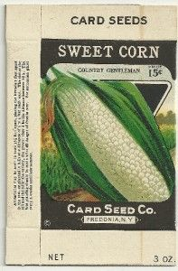 1920s Sweet Corn Seed Box Card Seed Co. Fredonia, N.Y.  Stone Litho