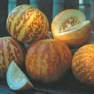 Melon Heirloom Seeds Fresh Seeds of 2012 Great Germination Rate
