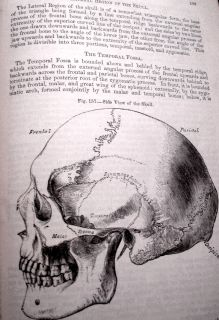 1878 Henry Gray Grays Anatomy Surgical Dissection Physiology Skeleton