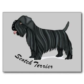 Scottish Scotch Terrier Dog Cartoon Art Postcards