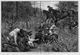 Dogs Horses Hunting Wild Hogs in Arkansas Hog Hunting