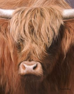 Highland Cow Original Rachel Stribbling Oil Painting