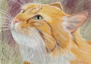ACEO Original Pastel Drawing Ginger Cat by Anna Hoff