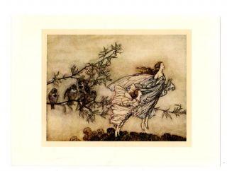 Fairies Birds Fantasy Peter Pan 1910 Arthur Rackham