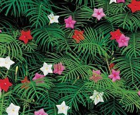 Cypress Vine Seeds 25 Fresh Seeds Mix Colors Free Shipping