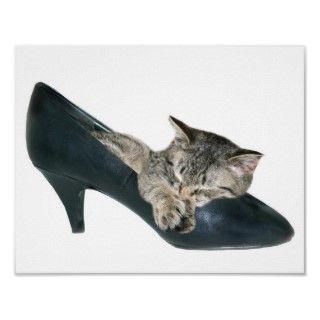 El gatito del Tabby snuggled para arriba y durmiendo en las señoras
