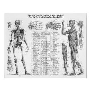 Human Skeletal & Muscular Anatomy The New Gresham Encyclopedia in