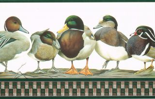 Types of Ducks Office Den 9 inches Wallpaper Border Wall