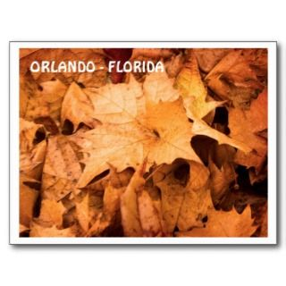 ORLANDO   FLORIDA POST CARDS