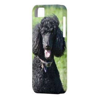 Standard Poodle dog black beautiful photo portrait iPhone 5 Cases