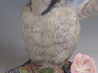 Boehm Fledgling Blue Jay Bird Figurine 400 77