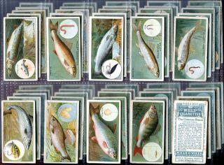 Tobacco Card Set WD HO Wills FISH BAIT Freshwater Coarse Fishing 1910